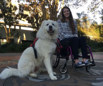 photo showing Alexandra Arceneaux in a wheelchair with Gilley, her service dog